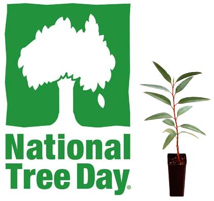 National Tree Day Visible Procrastinations